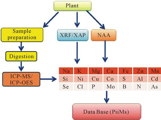 离子组学分析