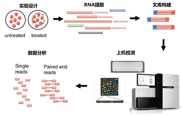 转录组分析流程