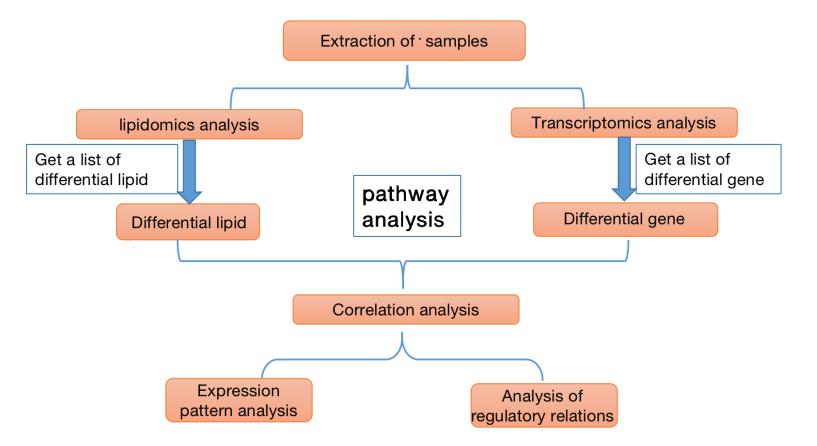 转录组学和脂质组学整合分析流程