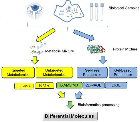 翻译后修饰蛋白质组与代谢组整合分析流程